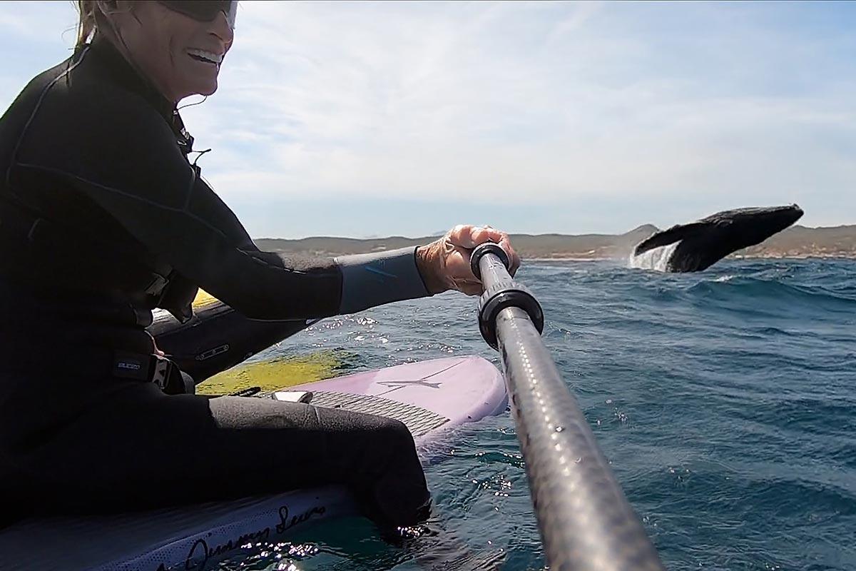 Du wingfoil avec des baleines