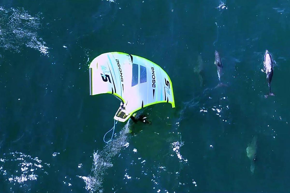Du wingfoil avec des dauphins